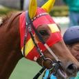 2008年1東京3~ケイアイプラウド02(5R3歳新馬)