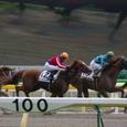2008年2東京4~トーホウサルー(3R3歳未勝利)