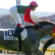 2008年5東京6~コスモポエム(6R新馬)