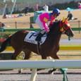2009年5東京5~エリドゥバビロン(5R2歳新馬)