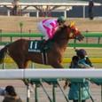 2010年1東京2~ケイアイテンジン(11R根岸ステークス)