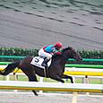 2011年4東京2~オールキャスト(3R2歳新馬)