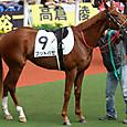 2012年4阪神7~ブットバセ(5R新馬)