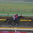 2012年3東京3~ボクノタイヨウ(11Rアハルテケステークス)