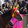 2012年1東京1~ヴィンテージイヤー(7R3歳500万下)