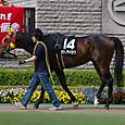 2012年2東京4~ボクノタイヨウ(10Rオアシスステ-クス)