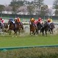 2006年2阪神6~フサイチパンドラ02?(11R桜花賞)
